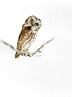 Karen Lenhart artist, Whoo Dat watercolor painting of an owl on an white background, Giclée Print Available
