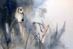Karen Lenhart artist, Frosty Perch watercolor painting of an owl portrait on an abstract background, Giclée Print Available