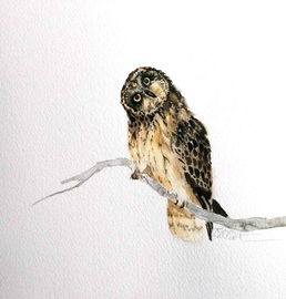 Karen Lenhart artist, Changing Perspective watercolor painting of an owl on an white background,