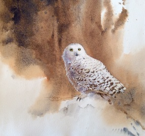 Karen Lenhart artist, Snowy watercolor painting of an snowy owl portrait on an abstract background, Giclée Print Available